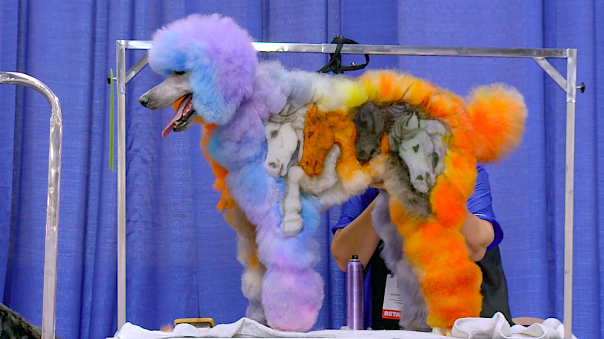 A brightly colored poodle with a mural of horse-heads shaved into its side stands on a competition table in the documentary Well Groomed